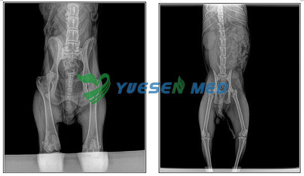 Digital X-ray System YSX040-C Test pictures for animal